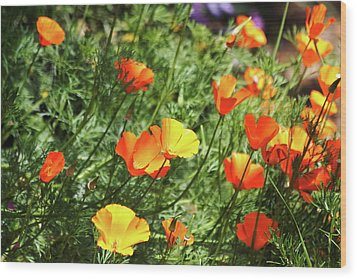 Orange Poppy Flowers . R1269 Wood Print by Wingsdomain Art and Photography