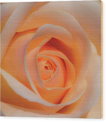 Orange Rose Wood Print