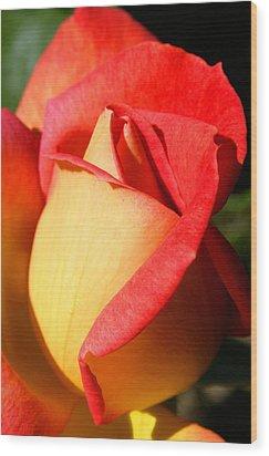 Orange Rosebud Wood Print