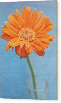 Orange Slanted Gerbera Wood Print by Photography by Gordana Adamovic Mladenovic