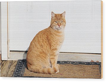 Orange Tabby Cat Wood Print
