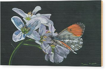Orange Tip  Wood Print