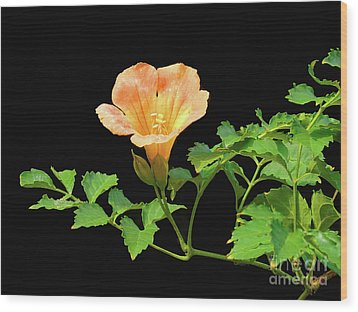 Orange Trumpet Flower Wood Print