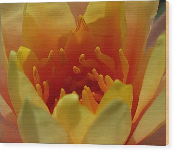 Orange Water Lily  Wood Print by Juergen Roth