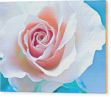 Orange White Blue Abstract Rose Wood Print