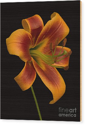 Orange Wonder Wood Print by Robert Pilkington
