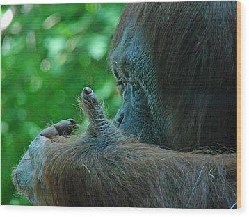 Orangutan 1 Wood Print