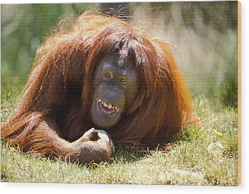 Orangutan In The Grass Wood Print