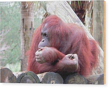 Orangutang Contemplating Wood Print by Rosalie Scanlon