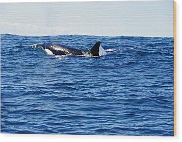 Orca Wood Print by Marilyn Wilson