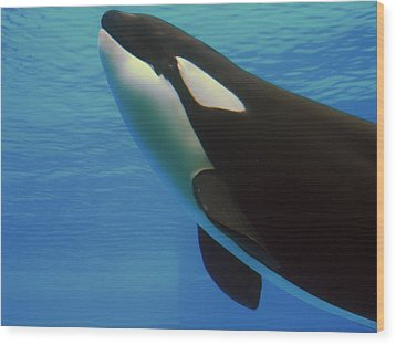 Wood Print featuring the photograph Orca by Meagan  Visser