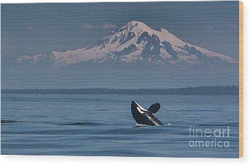 Orca - Mt. Baker Wood Print