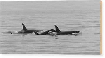 Orcas Bw Wood Print