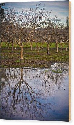Orchard IIi Wood Print by Derek Selander