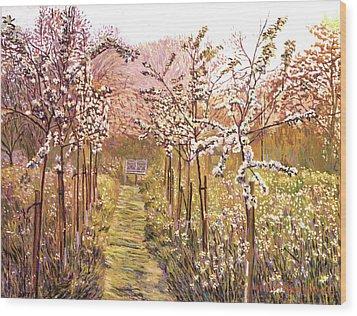 Orchard Morning Wood Print by David Lloyd Glover