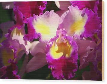 Orchid 1 Wood Print by Marty Koch