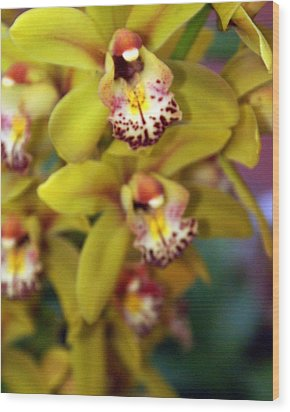 Orchid 11 Wood Print by Marty Koch