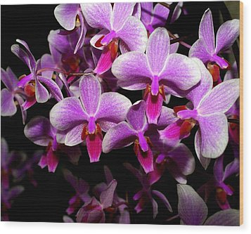Orchid 12 Wood Print by Marty Koch
