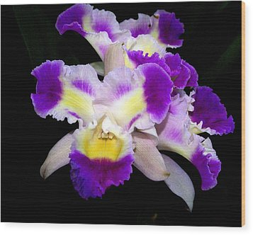 Orchid 13 Wood Print by Marty Koch
