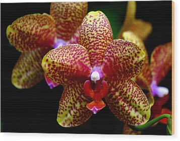 Orchid 15 Wood Print by Marty Koch