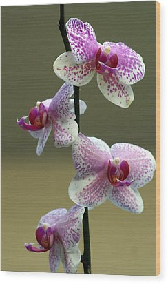 Orchid 16 Wood Print by Marty Koch