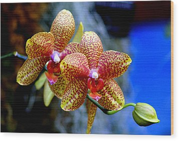 Orchid 17 Wood Print by Marty Koch