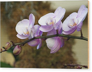 Orchid 18 Wood Print by Marty Koch