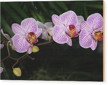 Orchid 2 Wood Print by Marty Koch