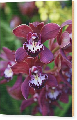 Orchid 20 Wood Print by Marty Koch
