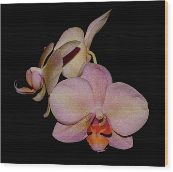 Orchid 2016 1 Wood Print by Robert Morin