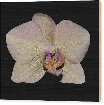 Orchid 2016 2 Wood Print by Robert Morin