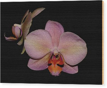Orchid 2016 3 Wood Print by Robert Morin