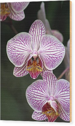Orchid 22 Wood Print by Marty Koch