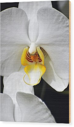 Orchid 23 Wood Print by Marty Koch