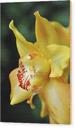 Orchid 24 Wood Print by Marty Koch