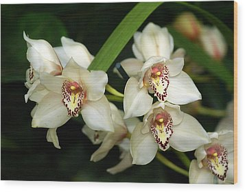 Orchid 3 Wood Print by Marty Koch