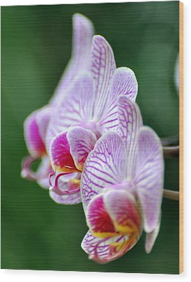 Orchid 30 Wood Print by Marty Koch