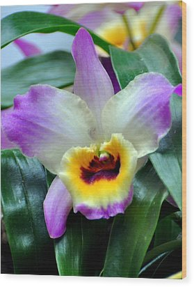 Orchid 34 Wood Print by Marty Koch