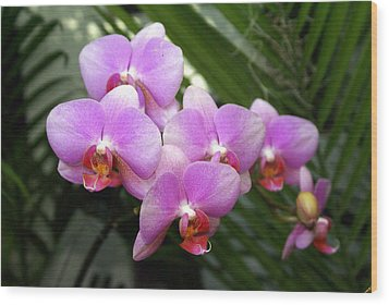 Orchid 4 Wood Print by Marty Koch