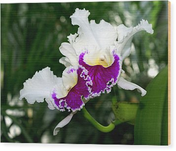Orchid 6 Wood Print by Marty Koch