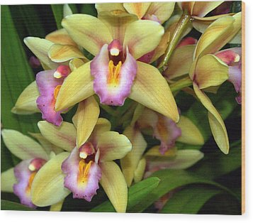 Orchid 7 Wood Print by Marty Koch