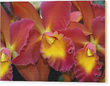 Orchid 8 Wood Print by Marty Koch