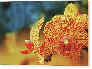 Orchid 9 Wood Print by Chaza Abou El Khair