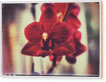 Wood Print featuring the photograph Orchid Alone by Isabella F Abbie Shores FRSA