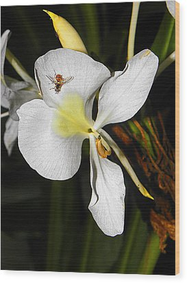 Orchid And Friend Wood Print