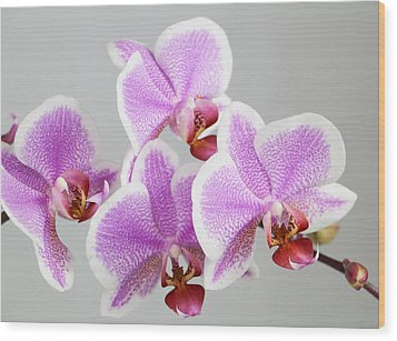 Orchid Array Wood Print