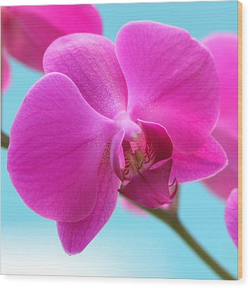 Orchid At The Ocean Closeup Wood Print by Michi Sherwood