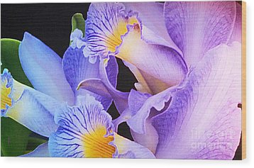 Orchid Bouquet Wood Print by Cindy Manero