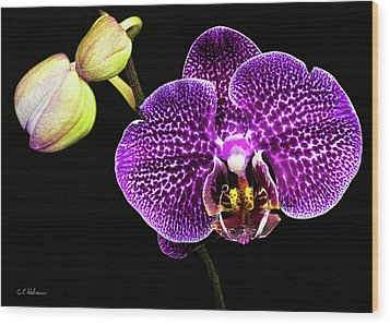 Orchid Wood Print by Christopher Holmes
