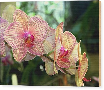 Orchid Delight Wood Print by Karen Wiles
